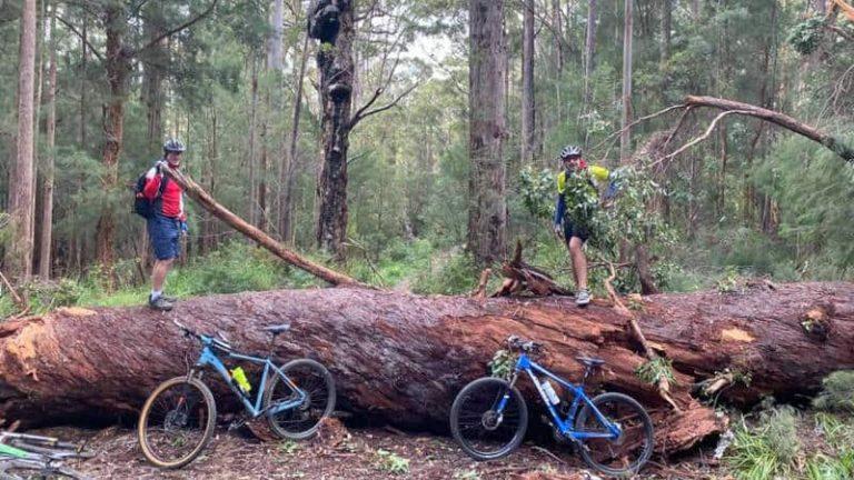 Tour Day 13 – Munda Biddi Trail Cycle Ride